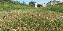 Gestion différenciée des espaces verts : oui à la nature en ville (...)